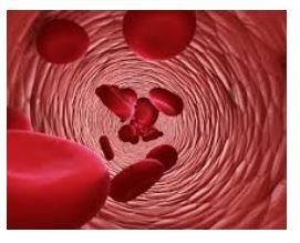 Blood flow and Meniere's disease